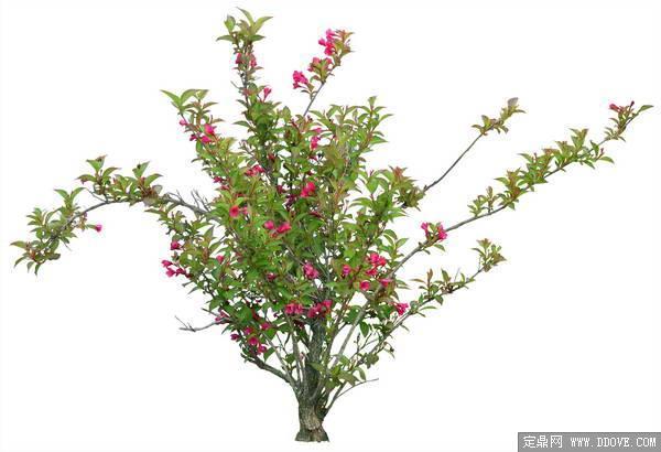 造型独特的花卉素材-80张psd格式后期花卉植物素材-fb