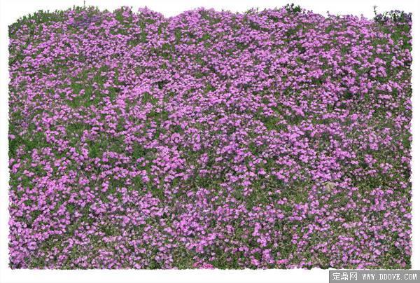 草花铺装素材-80张psd格式后期花卉植物素材-fb43