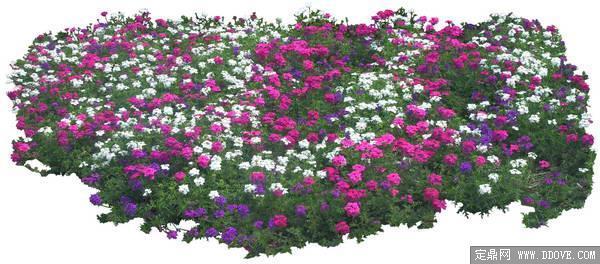地被植物草花素材-80张psd格式后期花卉植物素材
