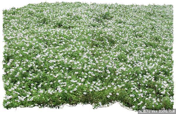 成片草花素材-80张psd格式后期花卉植物素材-fb45