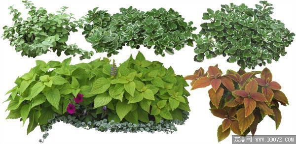 园林景观植物素材-80张psd格式后期花卉植物素材-fb图片