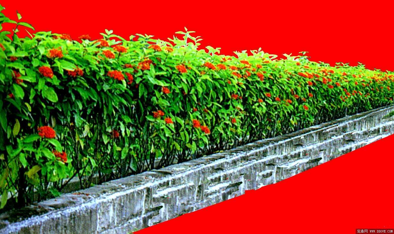 定鼎网 设计素材 配景素材 园林植物 灌木003  序号 文件名