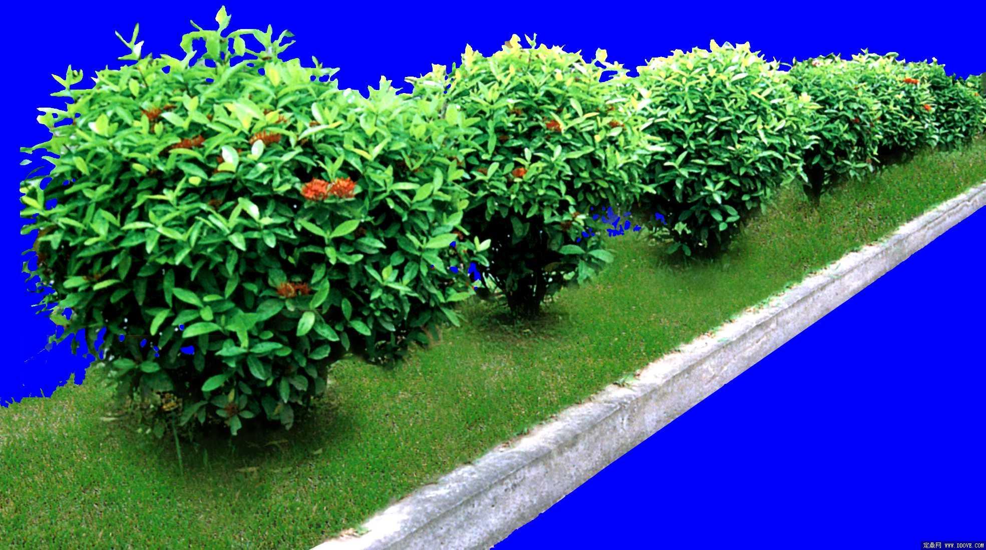园林灌木植物图例