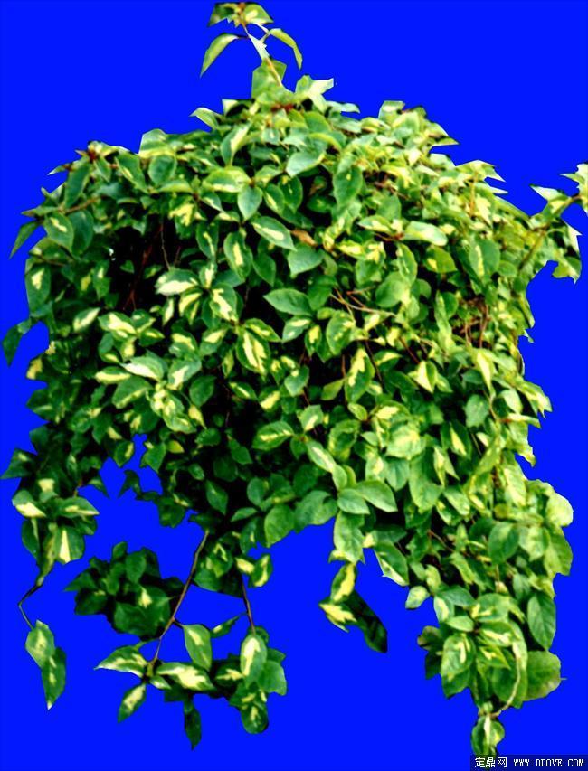 藤蔓植物花架手绘