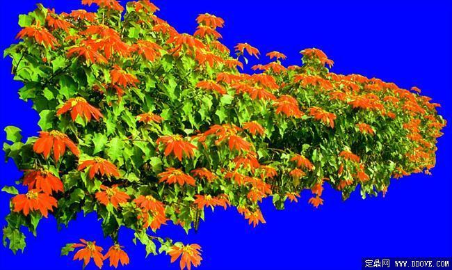 灌木067_效果图植物配景素材