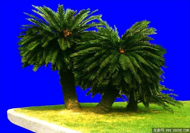 灌木076_效果图植物配景素材