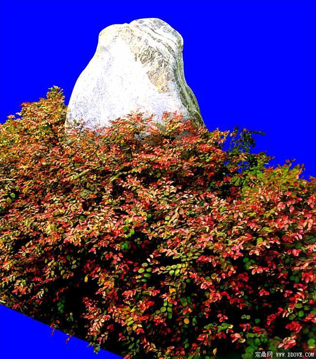 灌木116_效果图植物配景素材