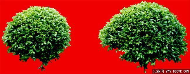 灌木123_效果图植物配景素材