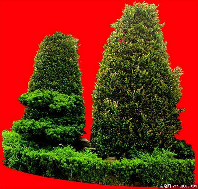 灌木129_效果图植物配景素材