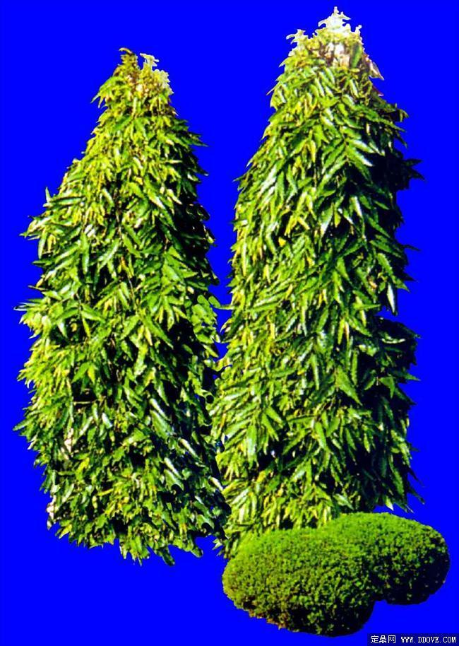灌木145_效果图植物配景素材