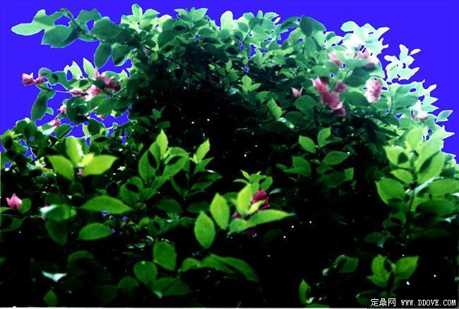 灌木154_效果图植物配景素材