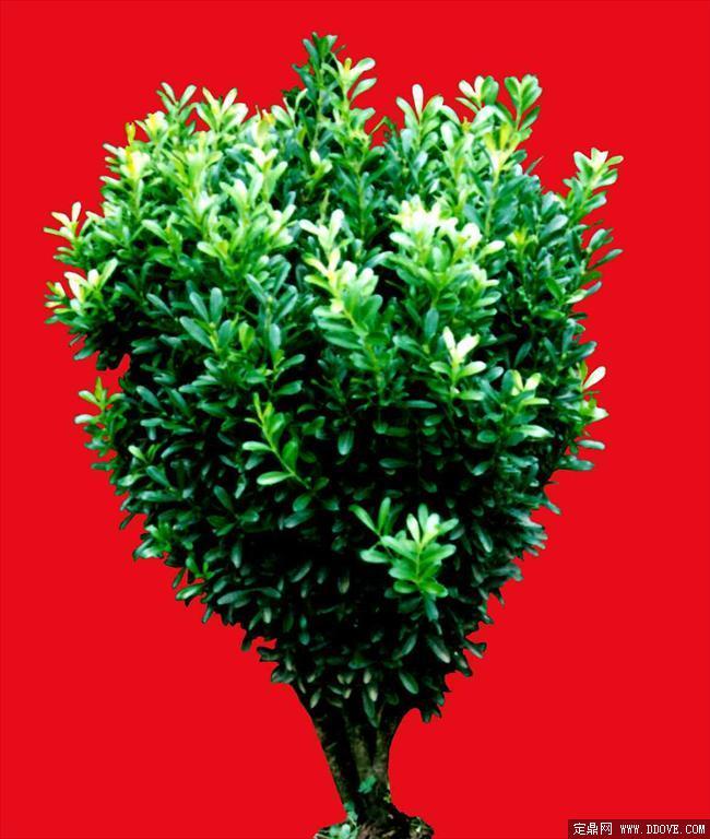 20m     灌木 植物 贴图素材 建.; 植物; 灌木259——植物素材 195.