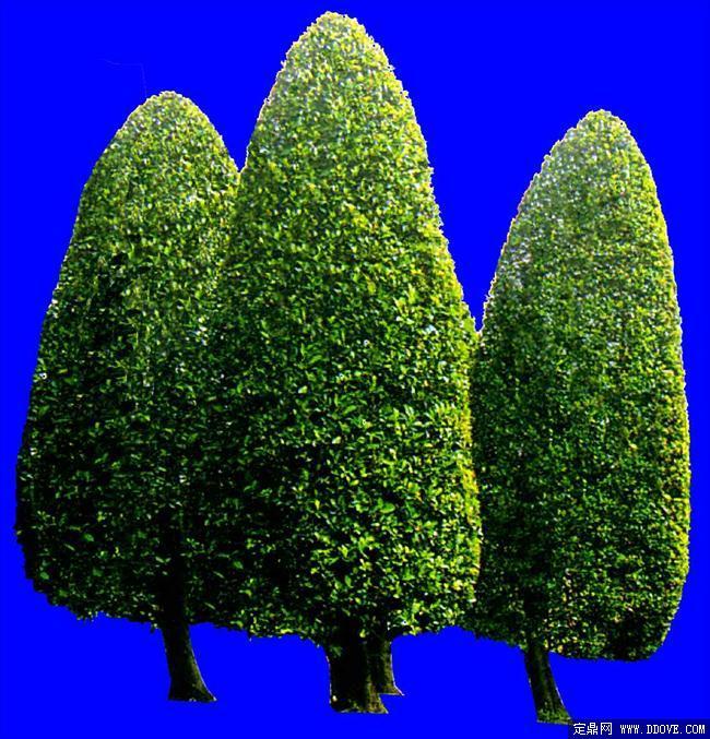 灌木贴图04_园林贴图素材081 -素材世界 - 园林设计 - 植物花草贴图
