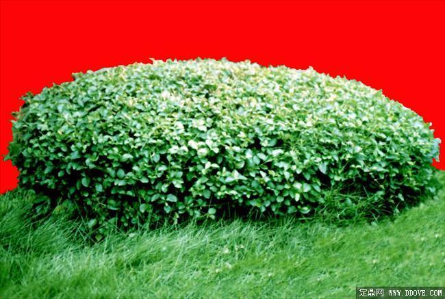 灌木196_效果图植物配景素材