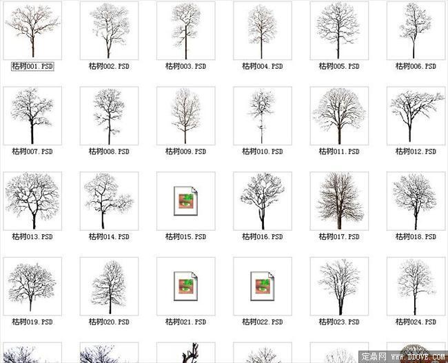 园林,建筑植物配景素材之枯树