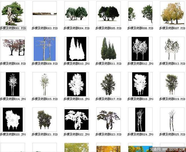 园林设计植物素材之多棵及树群