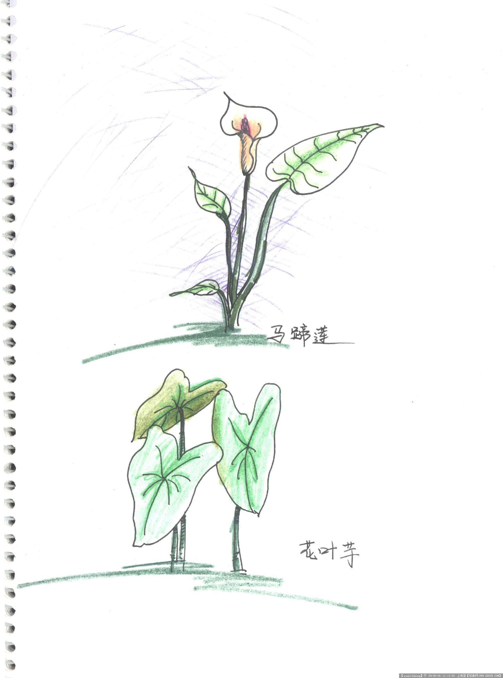 植物手绘图的图片浏览